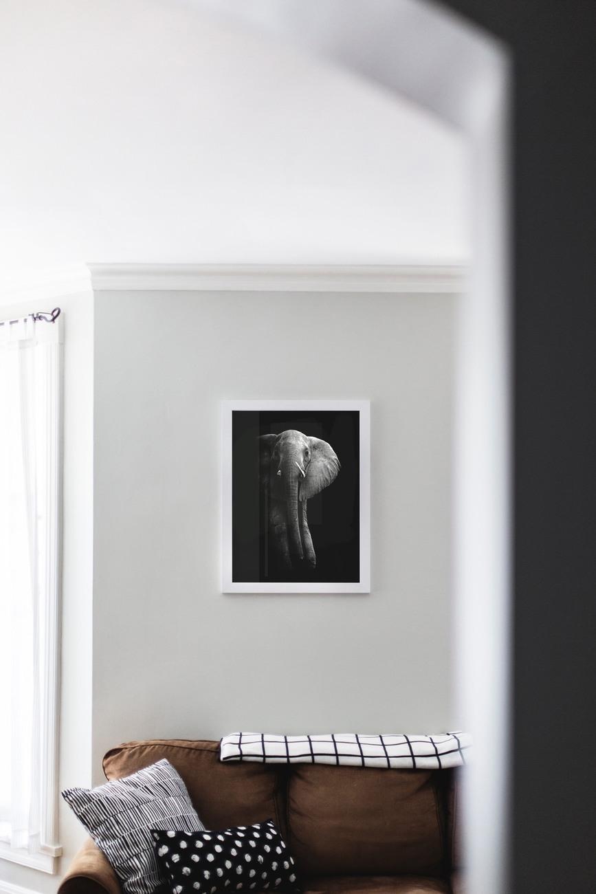 Fotografia d'arte Elephant!