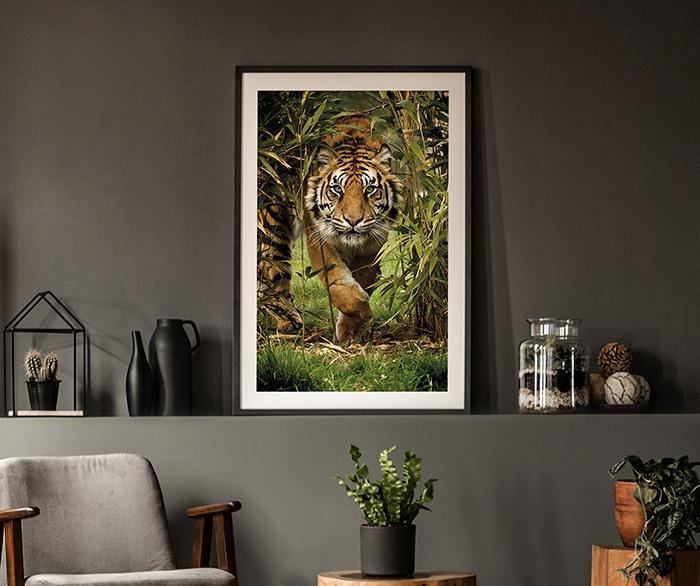 Fotografia artistica Sunset Lioness